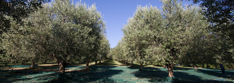 Oleificio Aleandri